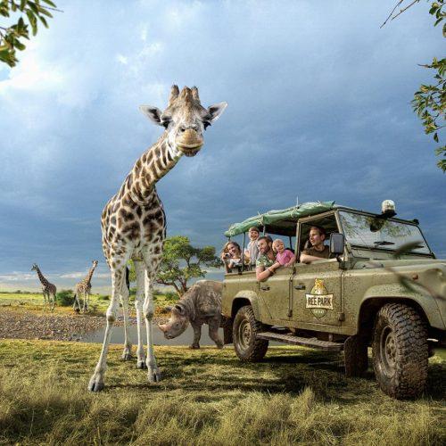 Djursland-Ree-Park-Safari-Land-Rover