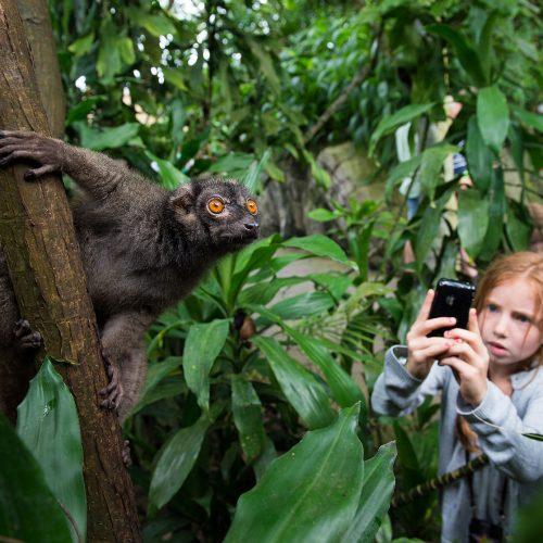 Gaester_kigger_paa_lemur